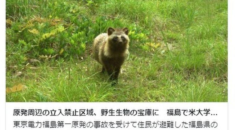 福島第一原発周辺をアメリカの大学が調査…立入禁止区域は野生生物の宝庫になっていた