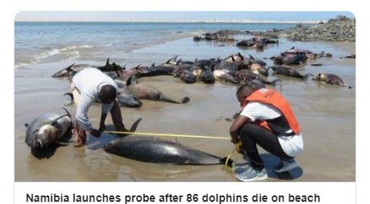 【ナミビア】イルカ86頭が打ち上げられ死んでいるのが見つかる…死因は調査中