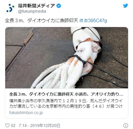 【日本海】福井県で深海魚の「アカグツ」と「ダイオウイカ」を発見!石川県では「リュウグウノツカイ」2匹を生きたまま捕獲