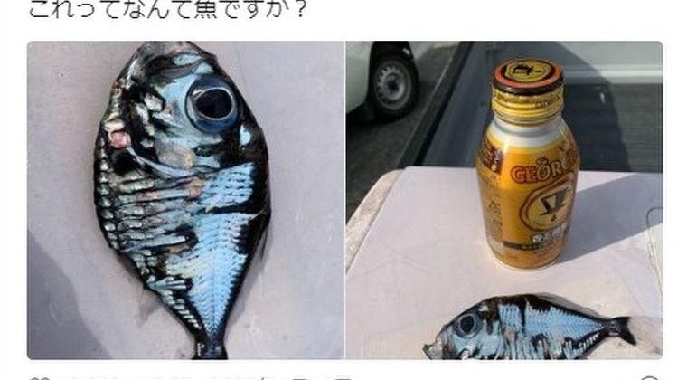 【関東】偶然捕獲した「謎の深海魚」がツイッターで話題に…専門家に聞いてみた結果