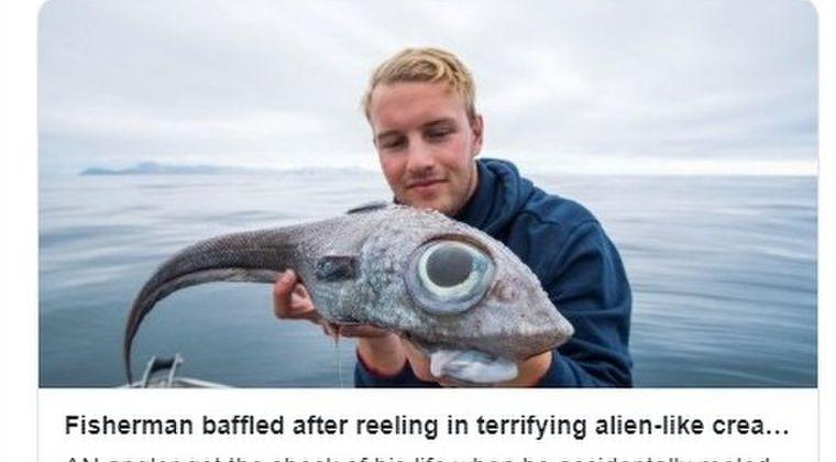 【ノルウェー】巨大な目をしたエイリアンのような「謎の魚」が釣り上げられる!「食べちゃったけど、タラの味がして美味しかった」