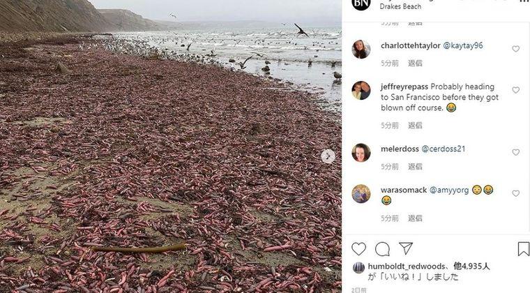 【閲覧注意】カリフォルニアの海岸に「ユムシ」が大量に打ち上げられる!