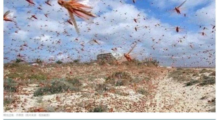 【黙示録】東アフリカで発生したバッタの大群がインドを超え中国にまで到達…その数「約4000億匹」に増え襲来