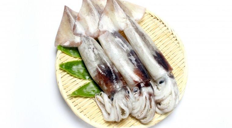 【日本海】新潟でスルメイカが激減し不漁…海水温の低下や乱獲が原因か?