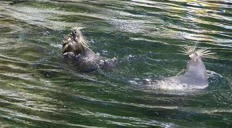 【カスピ海】ロシアで「希少なアザラシ300頭」が大量に漂着…謎の大量死に調査