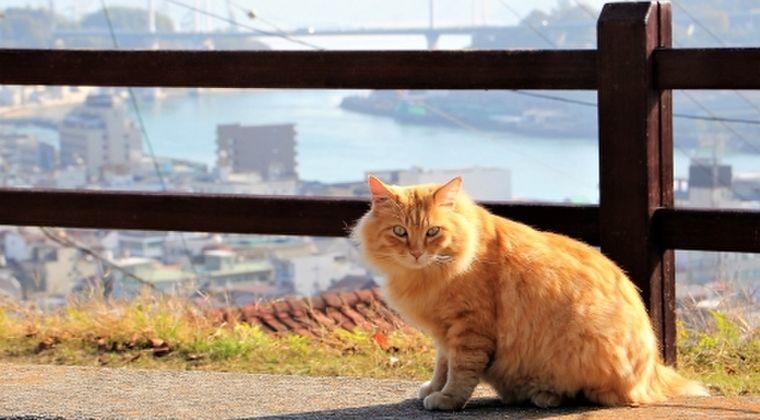 ロシア「新型コロナを使い、色んな動物で実験した結果…猫だけはCOVID-19に感染する。特に子猫は全てダメだった」