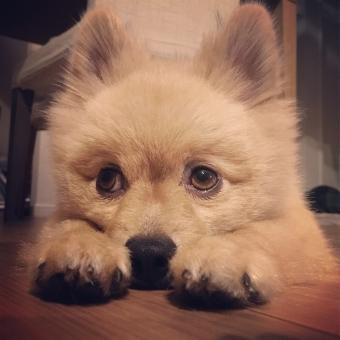【動物】香港でペットの犬が新型コロナに感染…確認は2例目