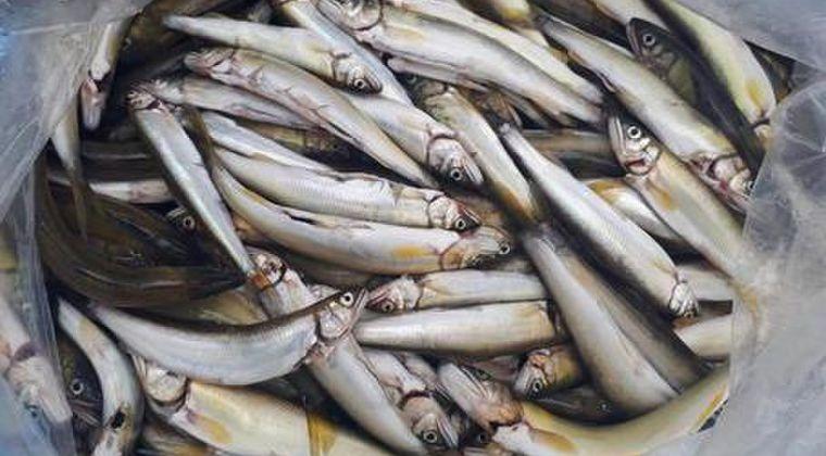 【前触れ】静岡県の川でアユなどの魚が大量に浮かんでいるのが見つかる「約1000匹以上」水質には異常なし
