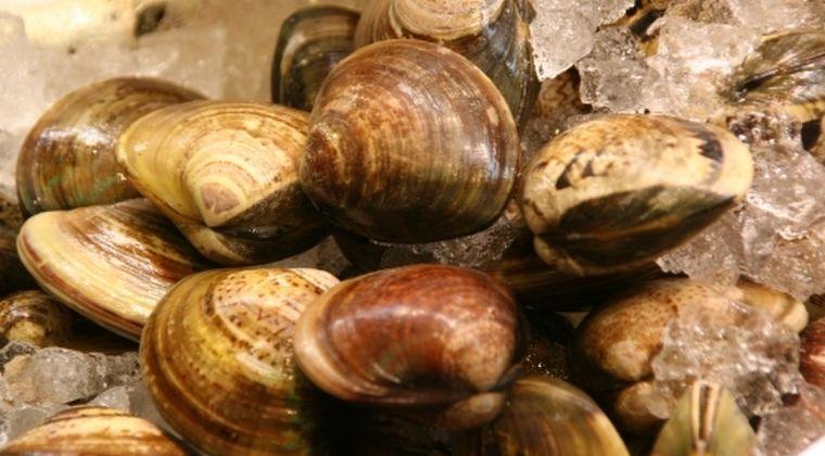 【驚愕】千葉・九十九里浜の大量ハマグリ…専門家「本当に驚いた。ホッキ貝はあるがハマグリは聞いたことがない」