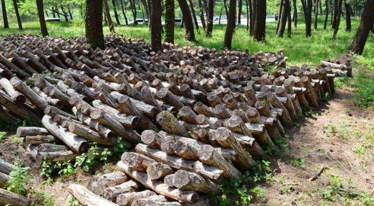 【食べて応援】東日本の各地で採られた野生キノコがヤバすぎる…基準値超えの放射性物質が検出!フリマアプリでの個人間売買が危険