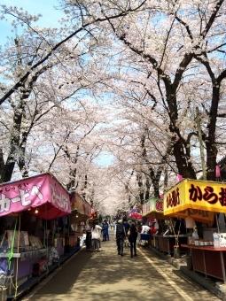 【愚者】目黒川で夜桜見物、渋谷では大騒ぎ、新橋では酔っ払い…「感染爆発」の警告がまるで他人事の人たち