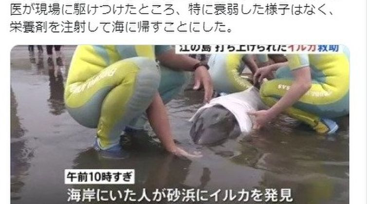 【地震前兆】9日、神奈川県・江ノ島の砂浜に「イルカ」が打ち上げられているのを発見…6日には静岡県下田でも「イルカ」が打ち上げられていた模様