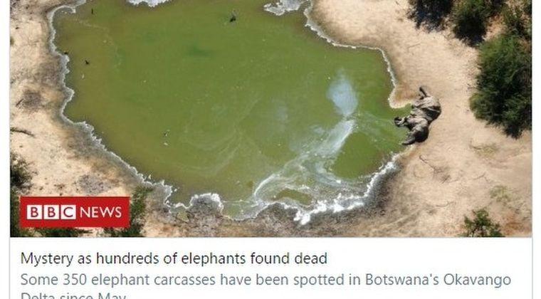 【原因不明】アフリカ・ボツワナで「ゾウ350頭」が謎の大量死…前例のない事態に科学者たちも困惑