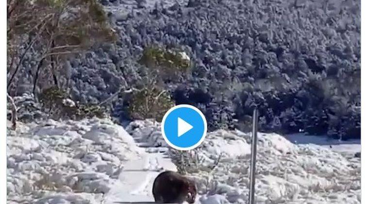 オーストラリアのタスマニアで異例の降雪「雪が降った事なんてなかったのに...」雪景色に住民たちも興奮