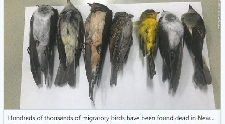 【不吉】アメリカで「渡り鳥、数十万羽」の死骸が発見される…原因は調査中