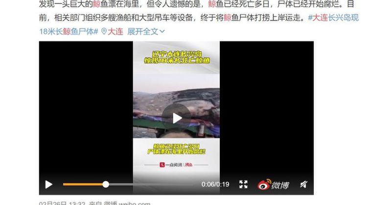 中国・大連の海岸に全長18メートル40トンの「巨大クジラ」が打ち上げられているのが見つかる!