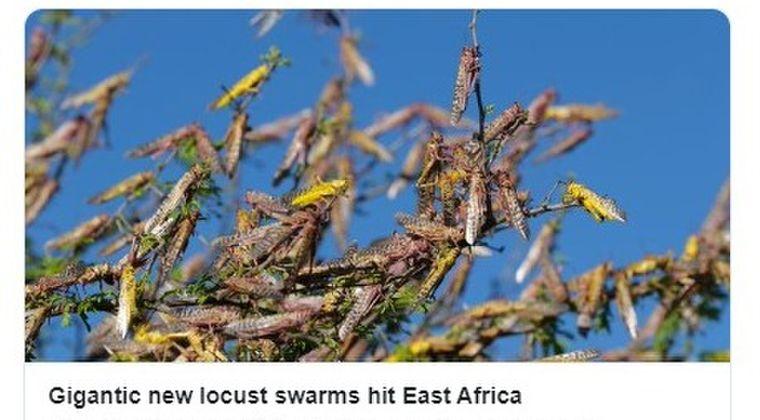【蝗害】農作物を食べ尽くすバッタの大群がアフリカを襲う!今回の大群の数は6月に500倍に増える可能性