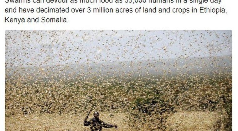 【蝗害】東アフリカで「バッタ数十億匹」がふ化してしまう…第3波の襲来にも備えなければならなくなった模様