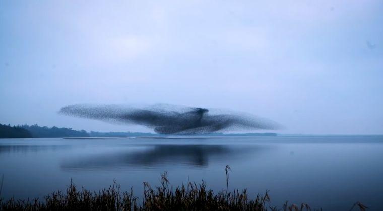 【アイルランド】湖の上空に「巨大な鳥」が出現!その正体は...?