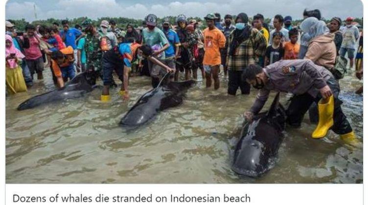 【地震前兆】インドネシア・ジャワ島付近の浜辺に「クジラ49頭」が打ち上げられる!