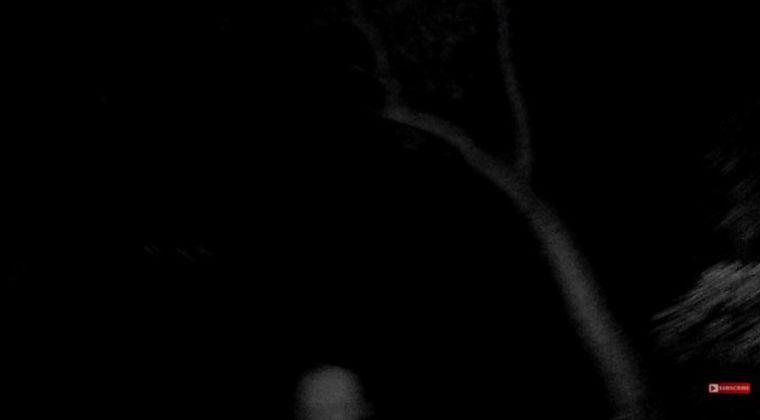 アメリカの超常現象捜査官が森で「幽霊の姿」を撮影!幽霊って向こうは物理干渉して来るくせに、こっちは干渉できないんだからズルいよな
