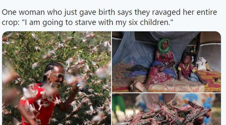 【蝗害】エチオピアで四半世紀ぶり大発生している「バッタ」の大群の影響で、深刻な食糧危機に陥る