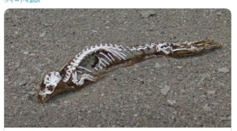 【恐竜】南極の溶けた氷の中に「謎の生物の骨」が映っていた?グーグルマップで確認できる模様