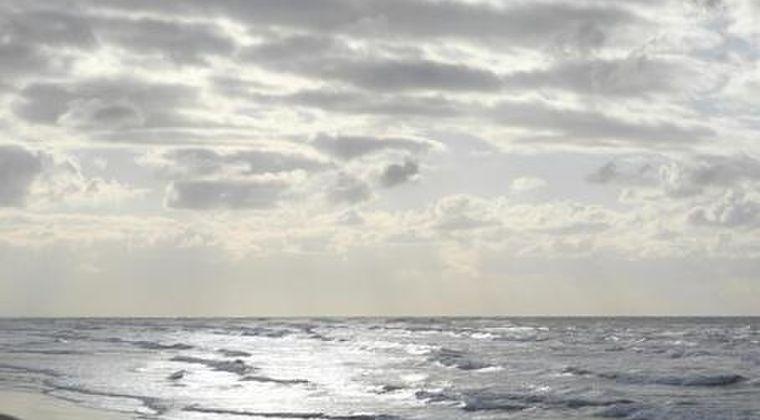【深海】「ダイオウイカが落ちてるんだが...」海岸に打ち上がっているのが発見される
