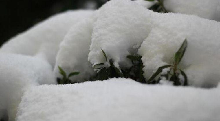 【寒波】シベリア高気圧「1084hPa」という記録的な数値に…数十年にあるかないかの強い寒気