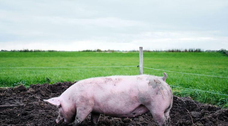 同僚の女性に腐った豚の肝臓を送りつけた42歳の男と26歳女が逮捕 尼崎支部