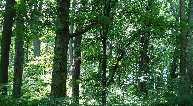 【悲報】人類、「木」を食べられない