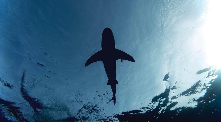 激レアな深海ザメを生きたまま捕獲www 静岡県沼津市