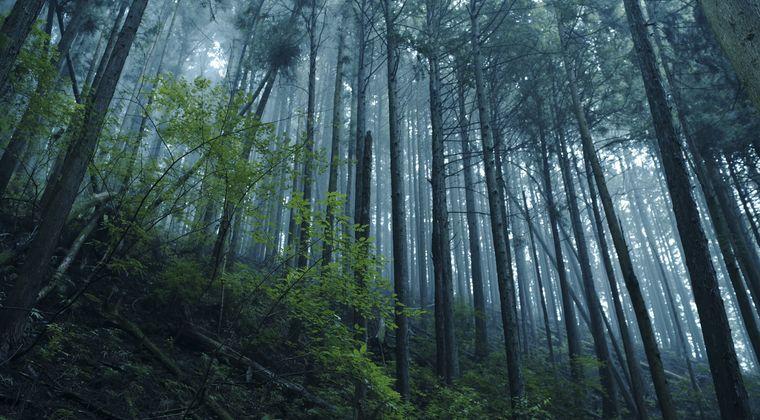 戦後日本「木材足りない!」 農林省「ふむ、それでは『スギ植林』をしてみてはどうだろう?」
