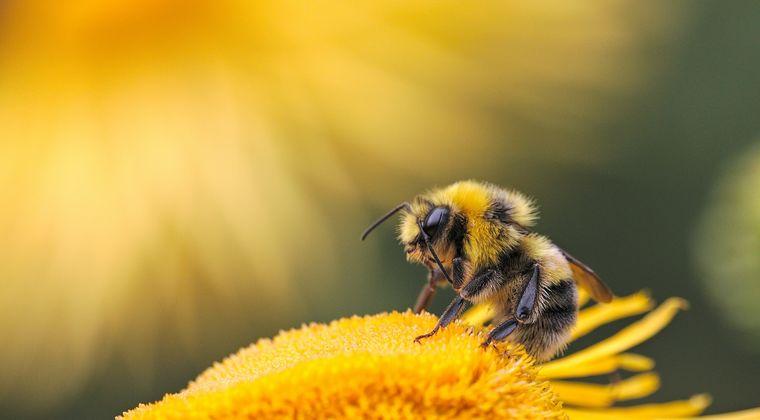 買い物から戻ったら車が蜂の巣状態にwwwww アメリカ・ニューメキシコ
