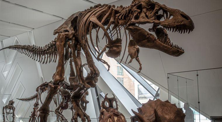 「我々は恐竜をクローン技術で復活させジュラシックパークを建設できる」 イーロン・マスクの共同創業者が主張