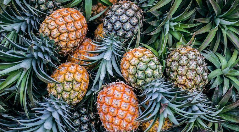 台湾産パイナップル、不良品見つかり農相が謝罪