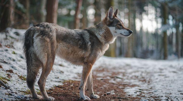 ボイチャ人狼で小○生ボイスが入ってくると退室する奴wwwwww #人狼