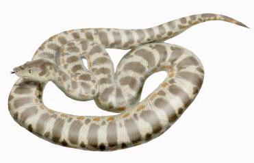 【巨大生物】かつて地球に存在した史上最大のヘビがデカすぎる…約15メートルに重さ1トン