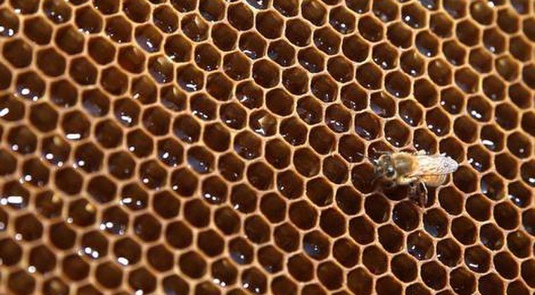 【食べて応援】福島・浪江のハチミツから基準超えるセシウム…製造元が自主回収へ