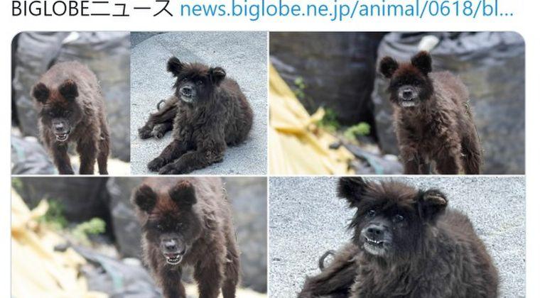 【UMAじゃなかった】クマでもなく「犬」だった…福島に出没した「謎の生き物」無事に飼い主のもとへ