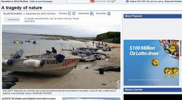 約90頭のクジラやイルカがオーストラリアの諸島で座礁しているのを発見