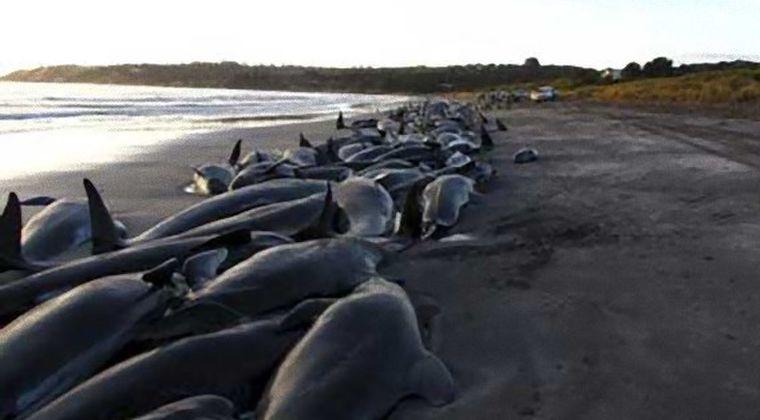 アメリカ海軍 「今まで黙ってたけど、クジラやイルカの大量座礁は俺たちのせいなんだ」