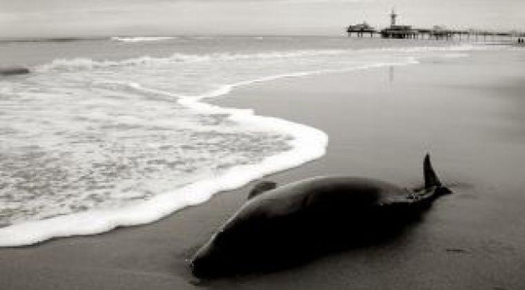 【東海地震】静岡で「クジラ」が4日連続で「5頭」も漂着!駿河湾に異変か…最近、地震雲とかも騒いでるし、これは大地震の前兆か?