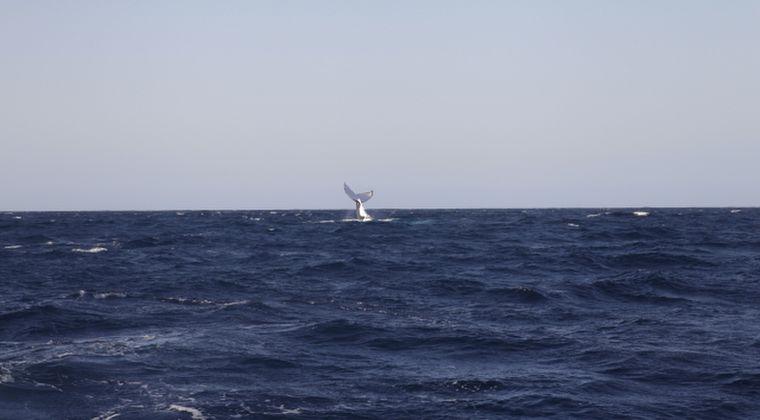 茨城県の海岸に体長13メートルの「クジラ」が砂浜に打ち上げられる!