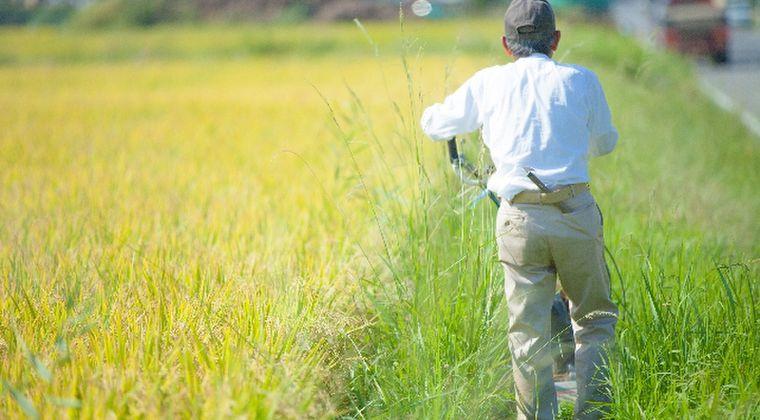 【福島の米】今年初のセシウム基準値超え…焼却処分へ