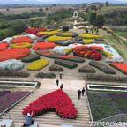 フローラパークで11月から2月限定の色とりどりの花を観賞 in コラート