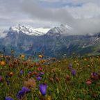 スイス旅行