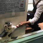そっとしておいて欲しい猫が可愛い。。