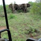 サファリパークで象に囲まれると!けっこうヤバイ!!