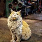 汚すぎる!ネコの画像の数々!!